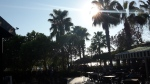 Alanya Urlaub Oktober Palmenbild